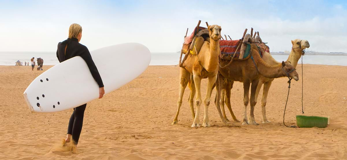 Surfer on the sand beach next to camels, Essauria, Morocco, Africa