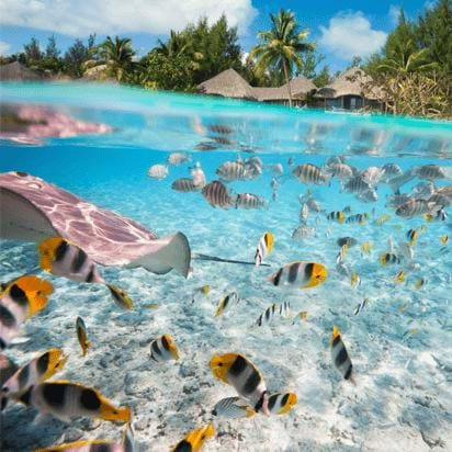 View of fish swimming in the ocean during luxury sustainability vacation in Bora Bora